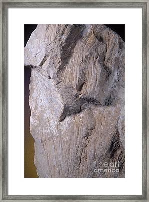 Shatter Cones, Barringer Crater Framed Print by Gregory G. Dimijian, M.D.