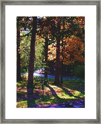 Shawnee Drive Through The Trees Framed Print by Jeffrey Todd Moore