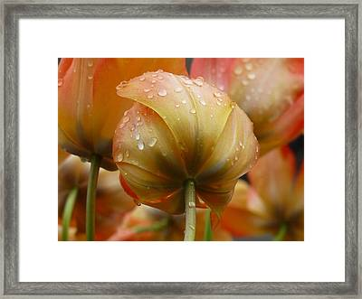 She Bowed Her Head Framed Print by Connie Handscomb