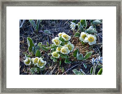 Framed Print featuring the photograph She Is Fragile by Jeremy Rhoades