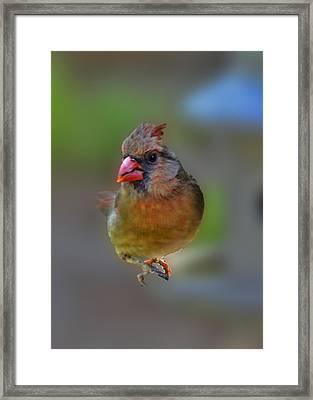 She  Framed Print by Larry Bishop