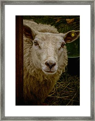 She Likes Crackers Framed Print by Odd Jeppesen