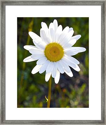 Framed Print featuring the photograph She Loves Me She Loves Me Not by Todd Kreuter