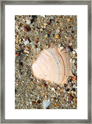 Framed Print featuring the photograph She Sells Sea Shells by Dick Botkin