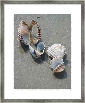 She Sells Sea Shells Framed Print by Suzanne Gaff