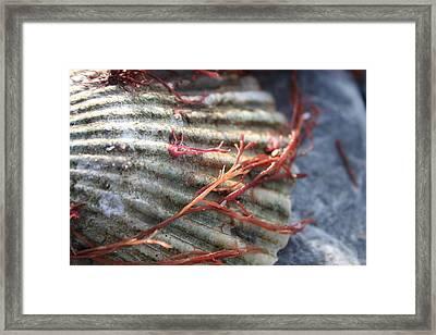 She Sells Seashells Framed Print by Leslie George