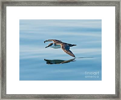 Shearing The Water... Framed Print