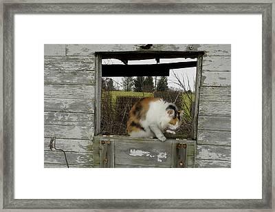 Shed Callie Framed Print by Daniel Kasztelan
