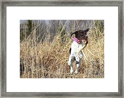 Shed Hunter Framed Print by Brook Burling