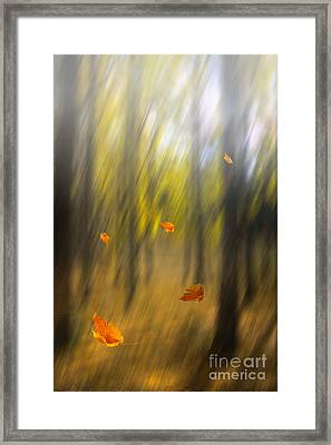 Shed Leaves Framed Print by Veikko Suikkanen