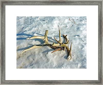 Shedders Framed Print