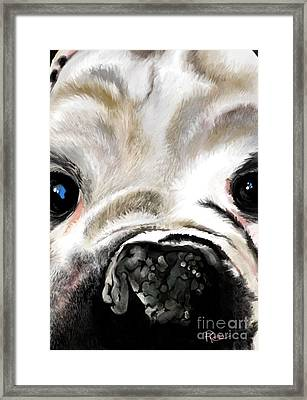 Sheeba Bulldog Framed Print