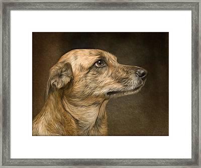 Sheeba Framed Print by Hazel Billingsley