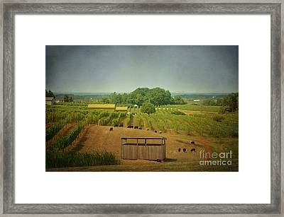 Framed Print featuring the photograph Sheep Among The Vineyards by Maria Janicki