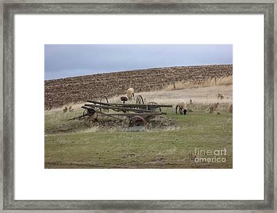 Sheep And Old Wagon Framed Print