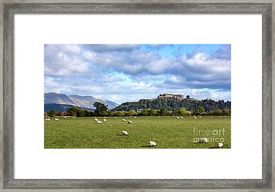 Sheep And Stirling Castle Framed Print by Jane Rix