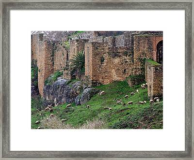Sheep Cliff Framed Print