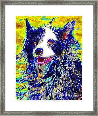 Sheep Dog 20130125v1 Framed Print by Wingsdomain Art and Photography