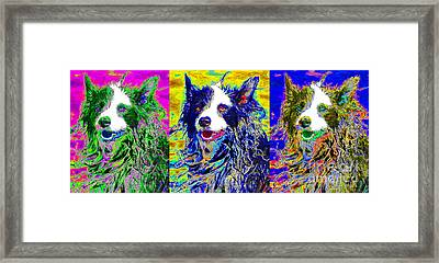 Sheep Dog Three 20130125 Framed Print by Wingsdomain Art and Photography