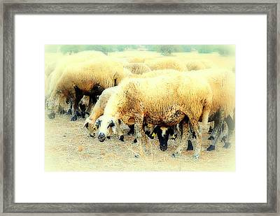 I Have This Incredible Sheep Feeling  Framed Print by Hilde Widerberg