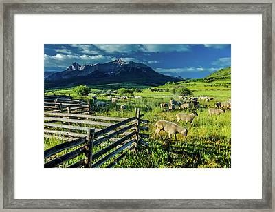 Sheep Graze On Hastings Mesa Framed Print