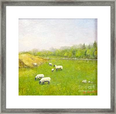 Sheep In Pasture Framed Print