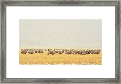 Sheep In Snow Framed Print