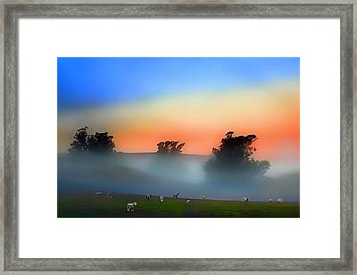 Sheep In The Early Morning Fog Framed Print by Wernher Krutein