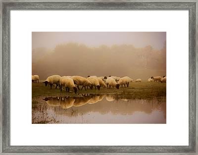 Sheep In The Fog Framed Print by Ian Hufton