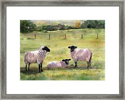 Sheep In The Meadow Framed Print