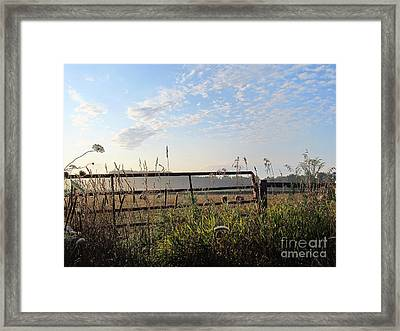 Sheep In The Meadow Framed Print by Tina M Wenger