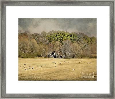 Sheep In The South Framed Print by Jai Johnson