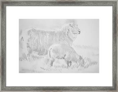Sheep Lamb Pencil Drawing Framed Print