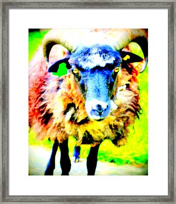 It's A Sheep Life Inside Of This Coat  Framed Print by Hilde Widerberg