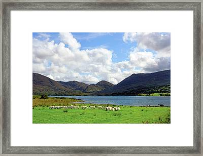 Sheep Near A Small Lake In The Gap Framed Print