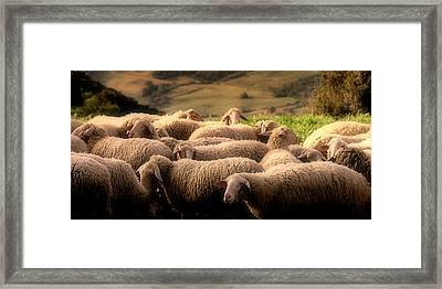Sheep On A Hillside Framed Print
