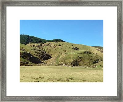 Sheep On Hill Framed Print by Ron Torborg