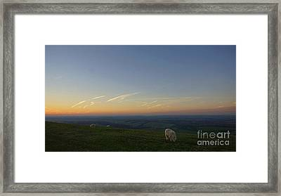 Sheep On The Gibbit Framed Print by Andrew Middleton