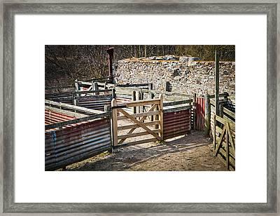 Sheep Pen Framed Print by Tom Gowanlock