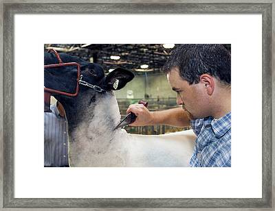 Sheep Shearing Framed Print by Jim West
