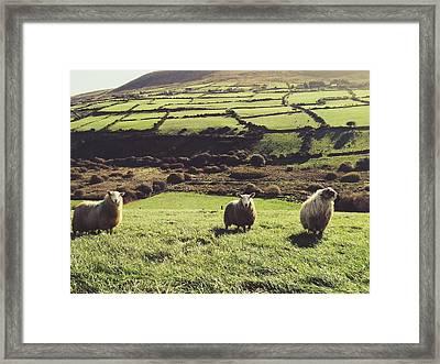 Sheep Standing In Field Framed Print by Thomas Peham / Eyeem