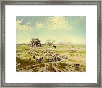 Sheepherding Montana Framed Print by Olaf Seltzer