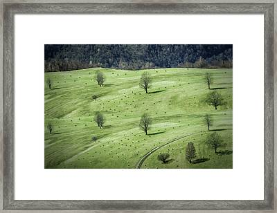 Sheeps ... Framed Print