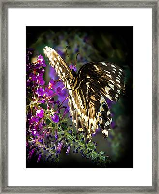 Sheer Elegance Framed Print