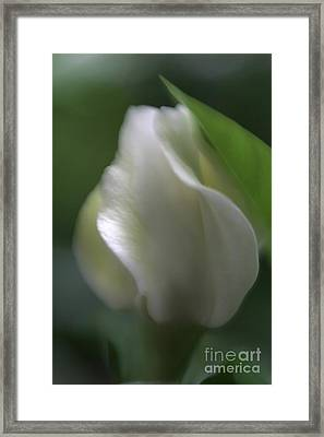 Framed Print featuring the photograph Sheer Elegance by Mary Lou Chmura