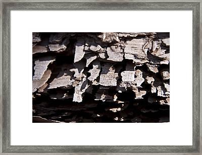 Sheets Of Bark Framed Print