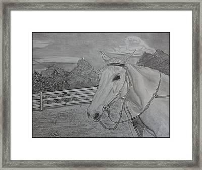 Sheika Framed Print by Tony Clark