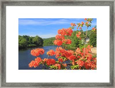 Shelburne Falls Bridge Of Flowers Azelea Framed Print by John Burk