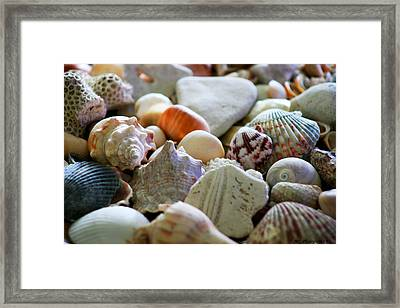 Shell Collection Framed Print by Marty Gayler