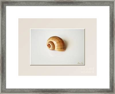 Shell. Delicate Colors Framed Print